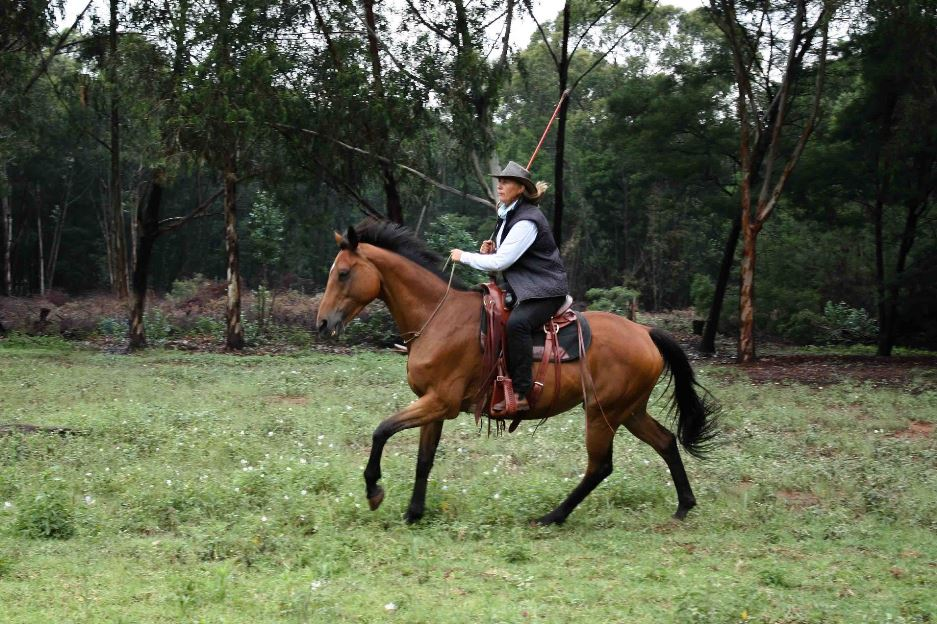 Natural Horsemanship - Training
